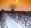 Sunset on snowy vineyard (600x600)