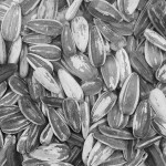 Sunflower seeds b-w (600x600)