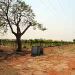 Vineyard Aus 150x150 - Thinking outside the box