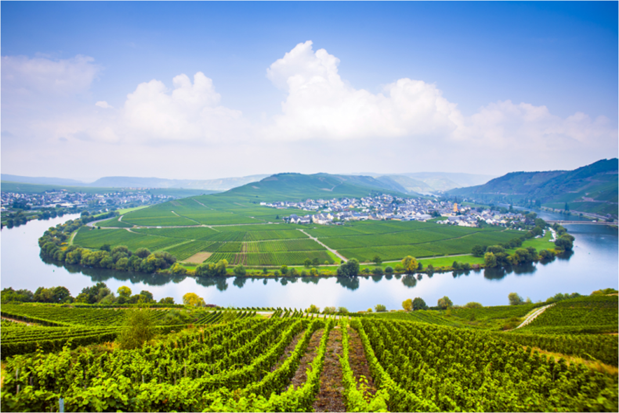 2 - Putting fizz in the German wine market