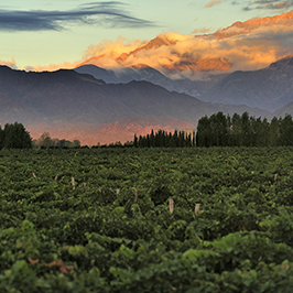 view over vineyards with mountain background - Australian wine drinkers yet to embrace wine in cans