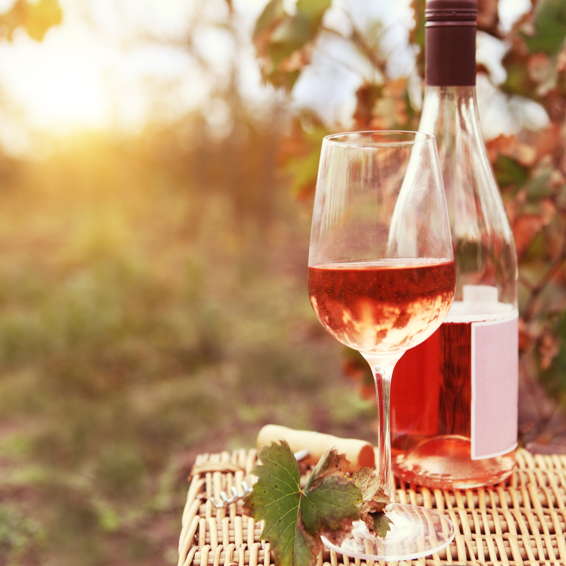 Picnic wine - The 12-month rosé party
