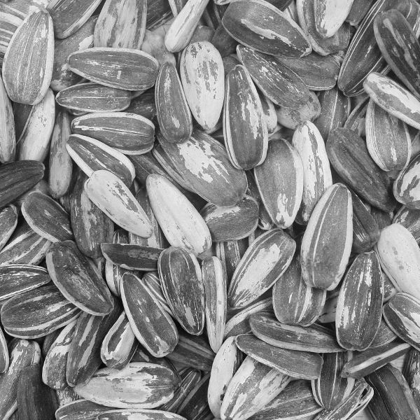 Sunflower seeds b w 600x600 - What do you do when there is no wine left?