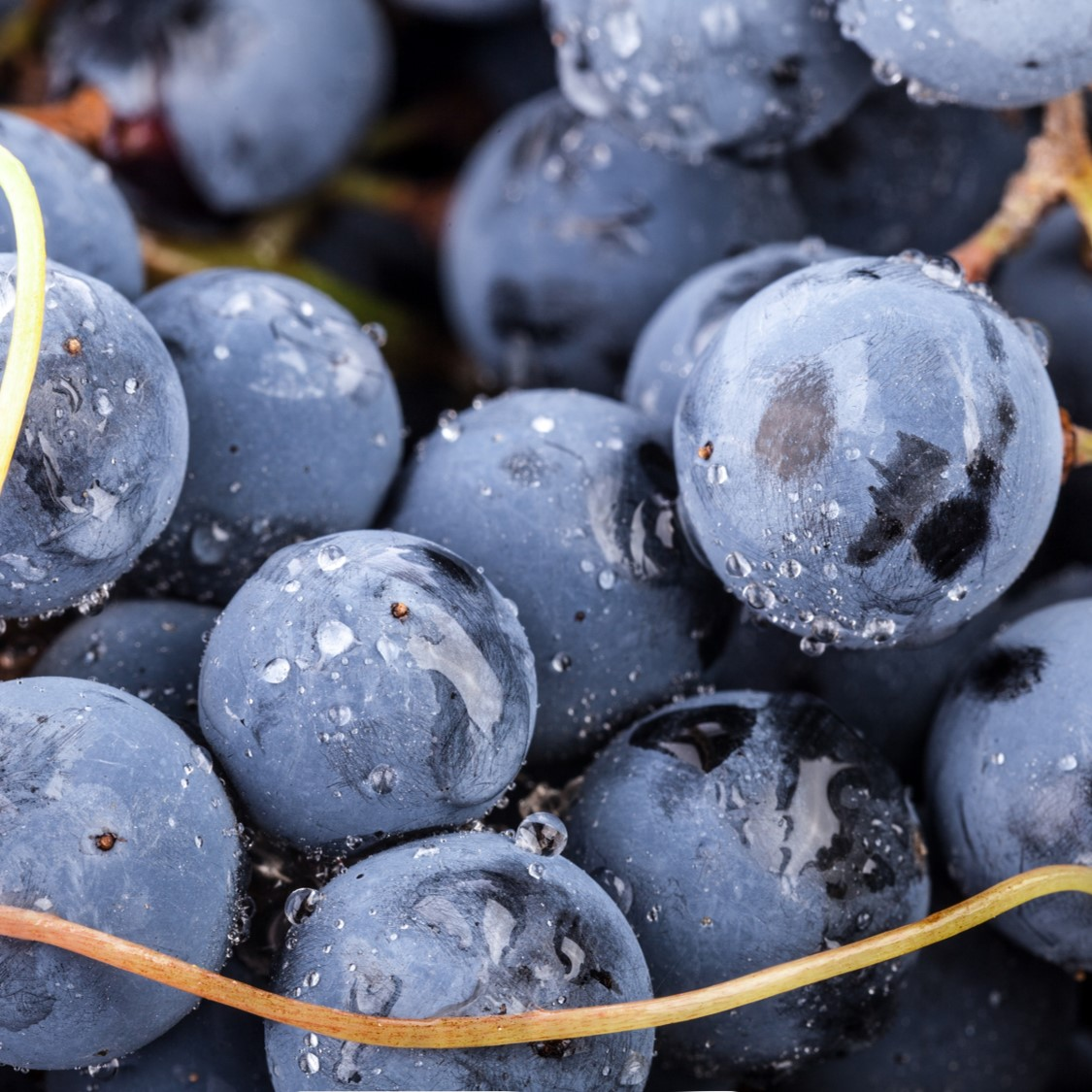 grapes - Getting back to nature
