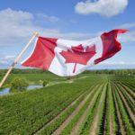 Canada 150x150 - Vinitrac® Sparkling standard questions