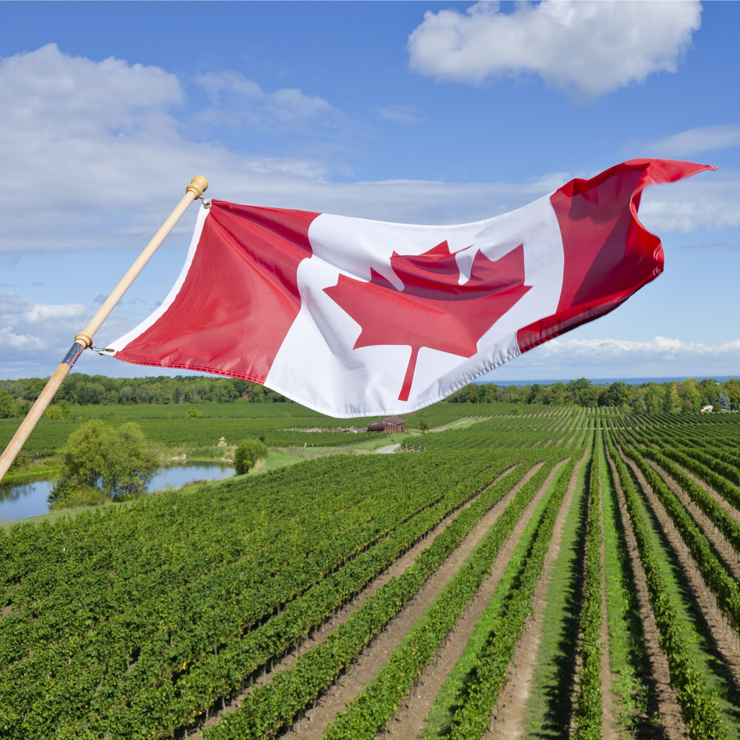Canada - Belgian wine drinkers are consuming less but engaging more