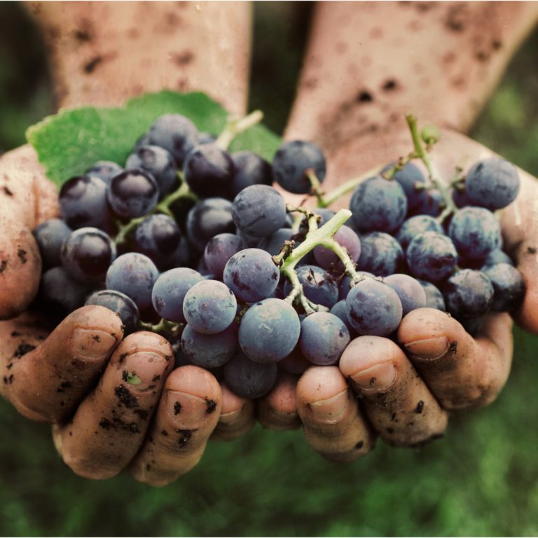 SOLA thumbnail 768x768 - Behind the Global SOLA Report: Sustainable, Organic & Lower-alcohol Wine Opportunities 2018