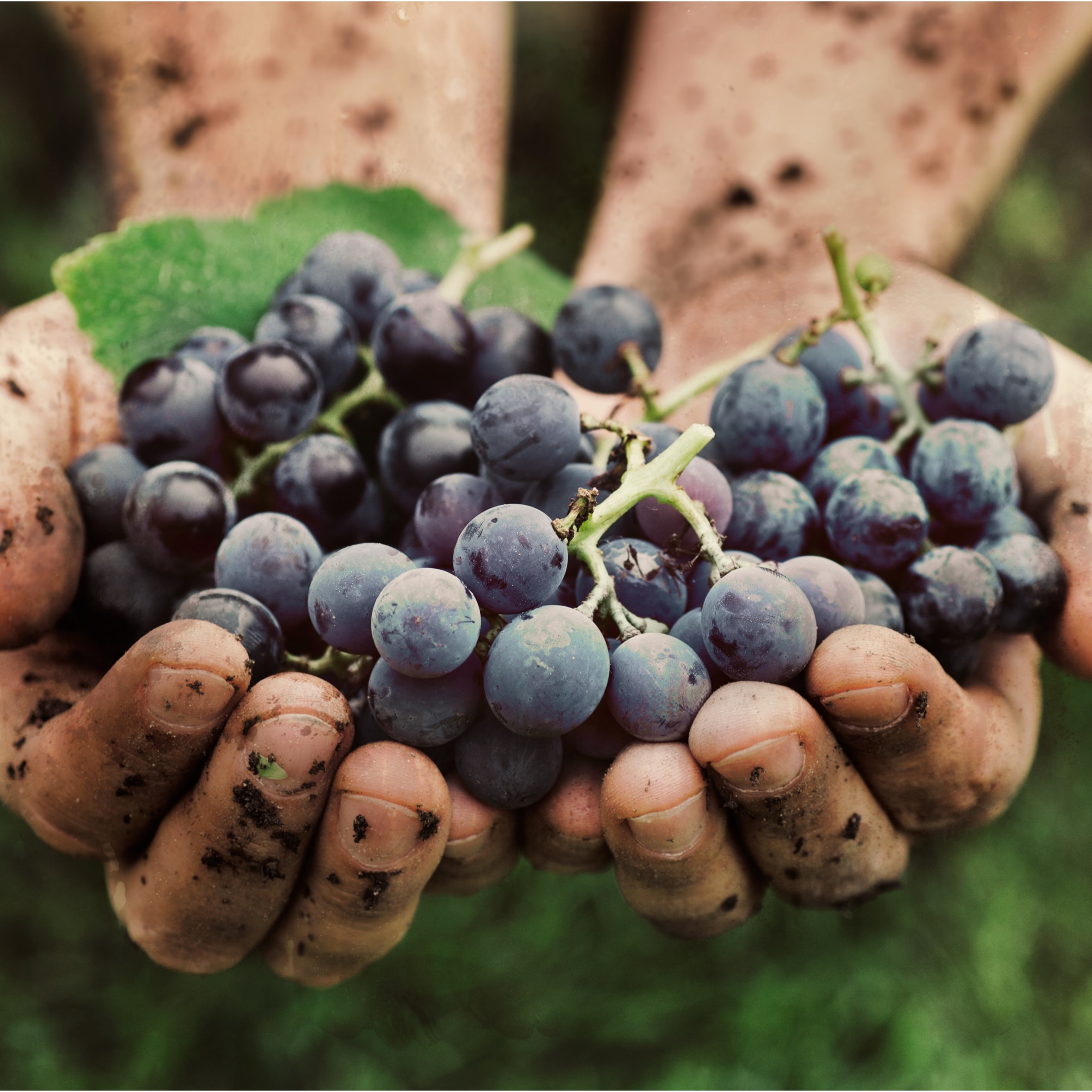 SOLA thumbnail - Behind the Global SOLA Report: Sustainable, Organic & Lower-alcohol Wine Opportunities 2018