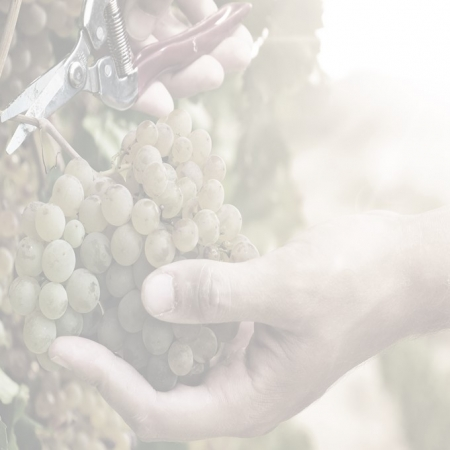 SOLA 450x450 - Behind the Global SOLA Report: Sustainable, Organic & Lower-alcohol Wine Opportunities 2018