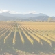 vineyard NN article 80x80 - What does sustainability mean throughout the world?