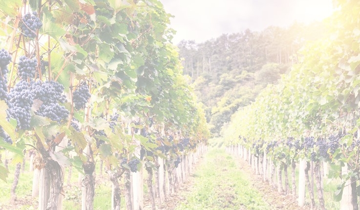 Organic 737x430 - SOLA: Sustainable and Organic Wine Opportunities