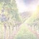 Organic 80x80 - Global Trends in Wine 2020 Video Series