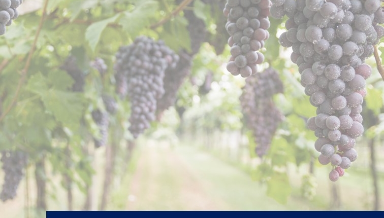 UK SOLA image 756x430 - SOLA: Sustainable and Organic Wine Opportunities